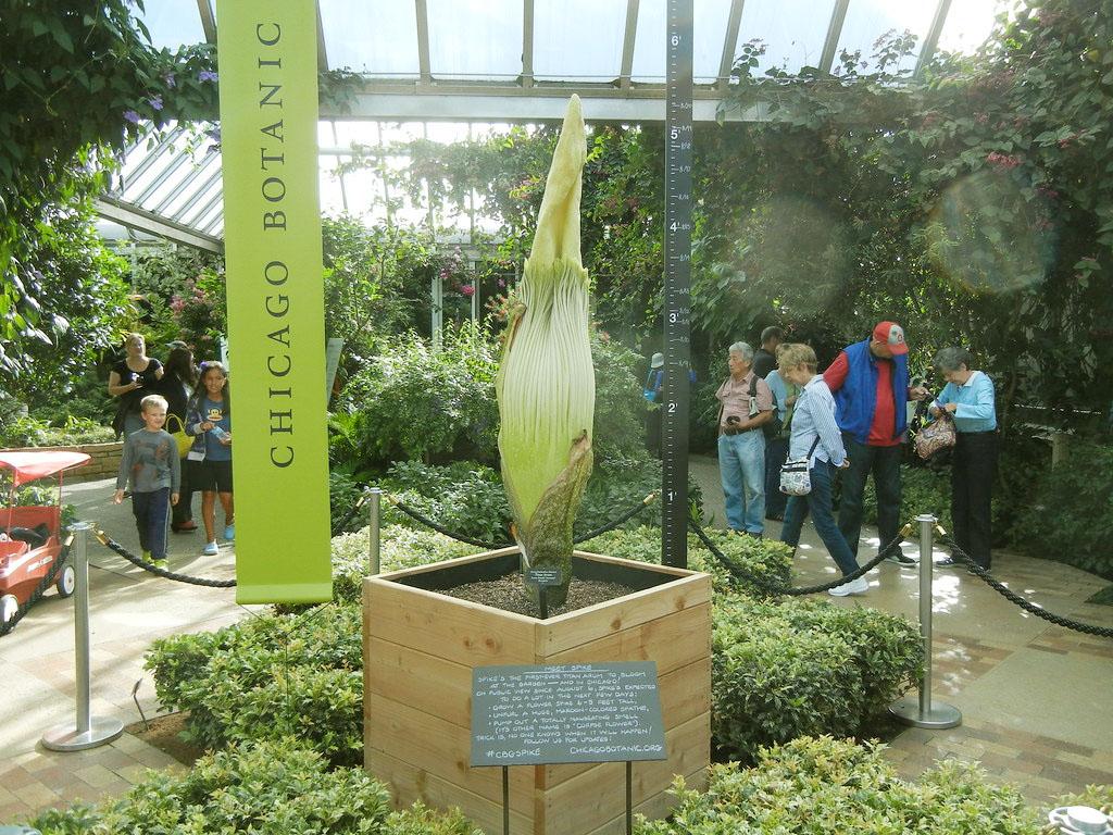 World's Biggest Flower Titan Arum