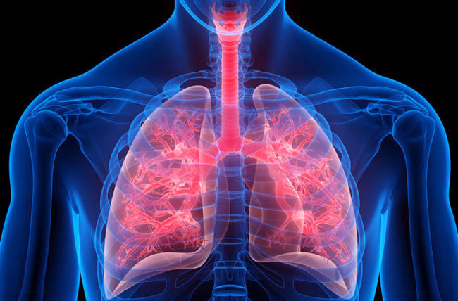 Best 12 Foods For Lungs